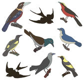 Samling av vektorbilder av amerikanska fåglar Royaltyfri Bild