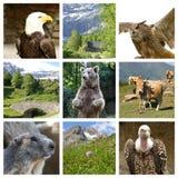 Samling av wild djur Arkivfoto