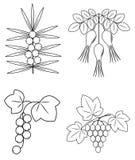 Samling En h?rlig filial av l?sa rosa b?r, vinb?r, havsbuckthorn, druvor Grafisk bild Anv?ndbara smakliga b?r f?r vektor illustrationer