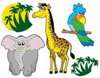 samling för 3 afrikansk djur Arkivbilder