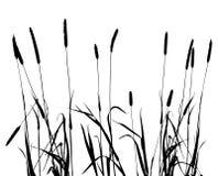 Samling för formgivareogräs, växtvektor stock illustrationer