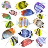 Samling för havsfisk som isoleras på vit bakgrund arkivfoton