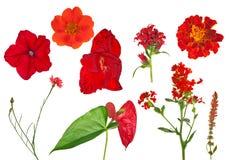 Samling för nio röd blommor som isoleras på vit Royaltyfria Bilder