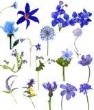 Samling för sexton blå blommor Royaltyfria Foton