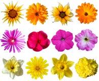 samling tecknade blom- handillustrationer Arkivbild
