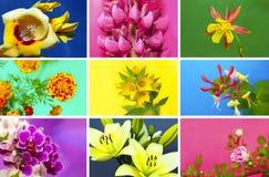 samling tecknade blom- handillustrationer Fotografering för Bildbyråer