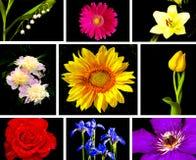 samling tecknade blom- handillustrationer Royaltyfri Bild