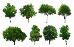 Samlingarna av isolerade gröna träd Arkivbilder