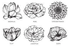 Samlingen av blommor som drar och, skissar med linje-konst Arkivfoton