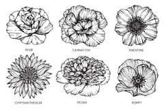 Samlingen av blommor som drar och, skissar med linje-konst på vit Royaltyfri Foto