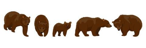 Samlingen av brunbjörnar i olikt poserar royaltyfri illustrationer