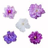 Samlingen av den olika rosa färger, vit och violeten blommar på vita lodisar Arkivbilder