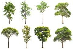 Samlingen av isolerade träd på vit bakgrund, a-beautif royaltyfri bild