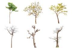 Samlingen av isolerade träd på vit bakgrund, a-beautif Royaltyfria Bilder