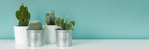 Samlingen av olika inlagda kaktushusväxter på den vita hyllan mot pastellfärgad turkos färgade väggen Kaktuns planterar banret arkivbild