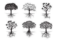 Samlingen av träd och rotar också vektor för coreldrawillustration Arkivfoton