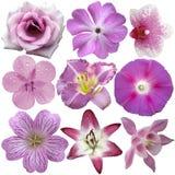 samlingen blommar rosa purple Arkivbild