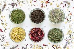 Samlingen från sex olika typer av te spricker ut Royaltyfri Bild