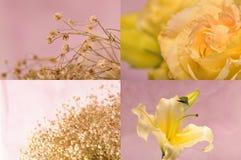 samlingsblommor Royaltyfria Bilder