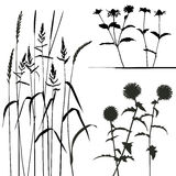 samlingsformgivare planterar vektorn stock illustrationer