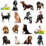 Samlingsfoto av gullig hundkapplöpning och kaniner arkivbilder