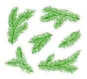 Samlingsgräsplanfilialer av en julgran som isoleras på vit bakgrund royaltyfri illustrationer