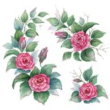Samlingsträdgården av blommor, sidor, knoppar, förgrena sig blommor av att krulla steg Ställ in vattenfärgbeståndsdelar på vit ba Arkivfoto