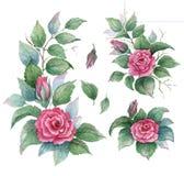 Samlingsträdgården av blommor, sidor, knoppar, förgrena sig blommor av att krulla steg Ställ in vattenfärgbeståndsdelar på vit ba Arkivbilder