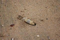 Samll螃蟹 库存图片