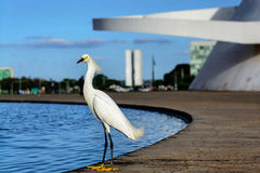 Samll egret stand near the water Stock Photography