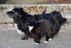 Samma hund och katt Royaltyfria Foton