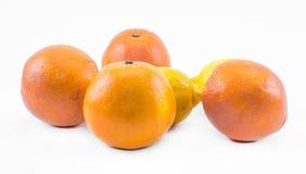 Sammansättning av apelsiner och citroner på en vit bakgrund Arkivfoton