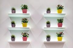 Sammansättning av blommor på vit väggbakgrund Arkivbilder