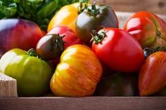 Sammansättning av färgrika tomater i sommarskördtid royaltyfri foto