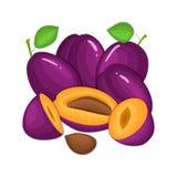 Sammansättning av flera plommoner Den purpurfärgade vektorplommonet bär frukt hel och för skiva aptitretande se Smakligt färgrikt Arkivfoto
