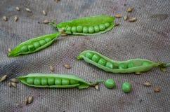 Sammansättning av gröna ärtor och korn Arkivfoto