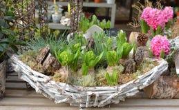 Sammansättning av hyacinter i en träkorg Royaltyfria Bilder