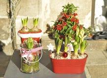 Sammansättning av hyacinter och det röda bärträdet royaltyfri bild