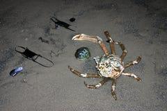 Sammansättning av krabban, ägg och skaldjurstingrockan på stranden royaltyfria bilder