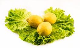 Sammansättning av nya och klippta citroner på sallad på vit bakgrund Arkivfoton