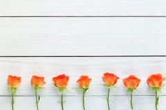 Sammansättning av nya rosor på en vit träbakgrund Arkivbild