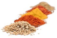 Sammansättning av olika kryddor på vit bakgrund Arkivfoto