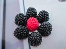 Sammansättning av sötsaker Fotografering för Bildbyråer