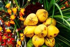 Sammansättning av tropiska frukter Arkivbilder