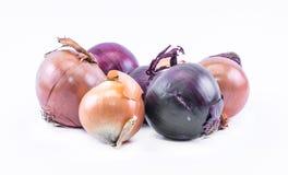 Sammansättning av violeten - blått- och ockralökar på en vit bakgrund Arkivbild