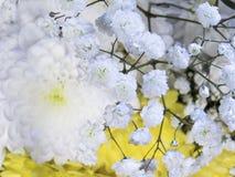 Sammansättning av vita blommor Royaltyfri Fotografi
