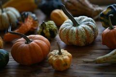 Sammansättning med halloween pumpor Royaltyfria Bilder