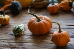 Sammansättning med halloween pumpor arkivfoton