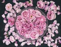 Sammansättning med knoppar och kronblad av en rosa färgros på en mörk ohyfsad bakgrund Royaltyfri Foto