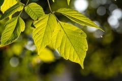 Sammansättning med skönhetgräsplansidor royaltyfri foto